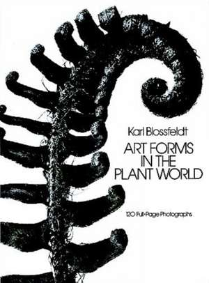 Art Forms in the Plant World imagine