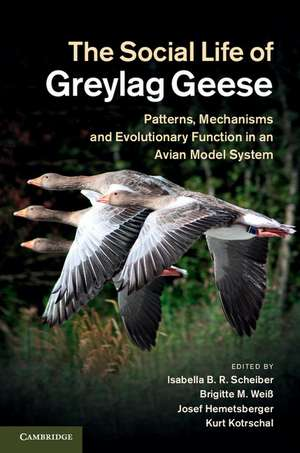 The Social Life of Greylag Geese