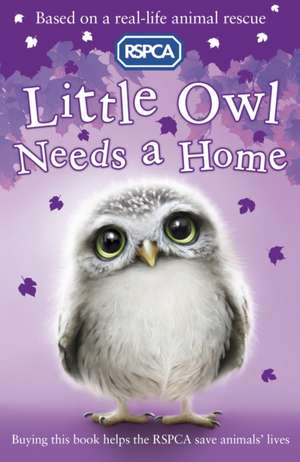 Little Owl Needs A Home