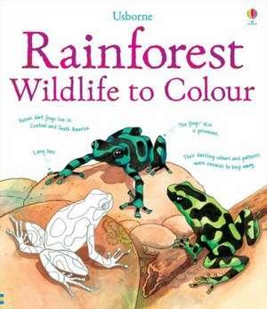 Rainforest to Colour