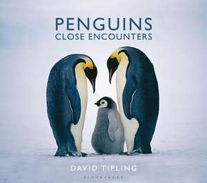 Penguins: Close Encounters de David Tipling