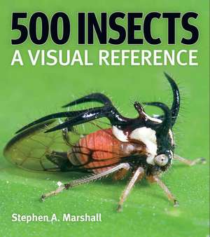 500 Insects imagine