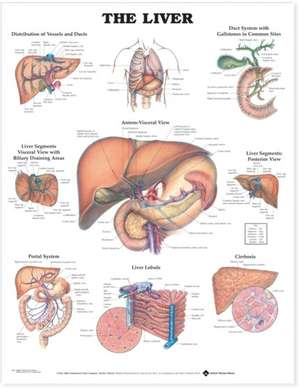 The Liver Anatomical Chart