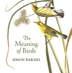 The Meaning of Birds imagine