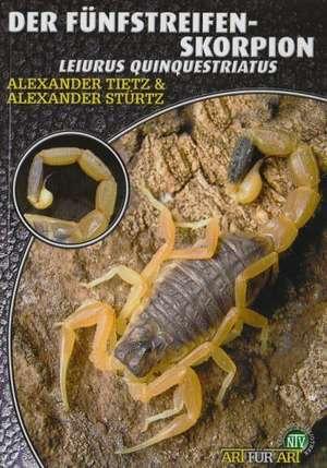 Der Fuenfstreifen-Skorpion - Leiurus Quinquestriatus