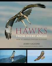 Hawks from Every Angle – How to Identify Raptors In Flight