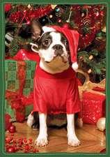 Santa's Little Helper Boxed Holiday Half Notecards