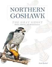 Northern Goshawk, the Gray Ghost: Habits, Habitat, and Rehabilitation