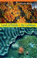 Corals of Florida and the Caribbean