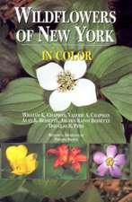 Wildflowers of New York in Color
