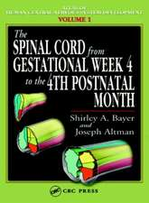 The Spinal Cord from Gestational Week 4 to the 4th Postnatal Month