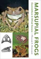 Marsupial Frogs – Gastrotheca  and Allied Genera