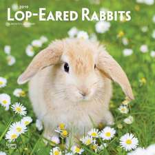 Lop Eared Rabbits 2019 Square Wall Calendar