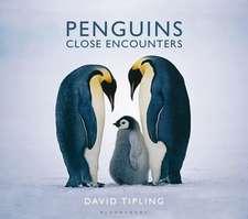 Penguins: Close Encounters