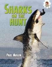 Sharks on the Hunt