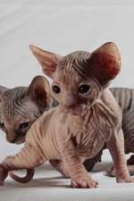 Sphinx Cat Journal Must Have Landed on the Wrong Planet. Again.