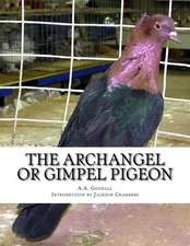 The Archangel or Gimpel Pigeon