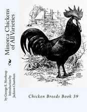 Minorca Chickens of All Varieties
