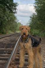 Airedale Terrier 9th Notebook