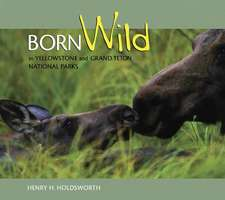 Born Wild in Yellowstone and Grand Teton National Parks
