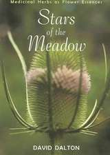 Stars of the Meadow