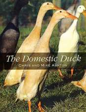 The Domestic Duck:  A Manual for Helicopter Enthusiasts