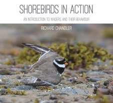 Shorebirds in Action