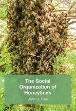 The Social Organisation of Honeybees