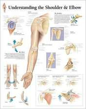 Understanding the Shoulder & Elbow Chart:  Wall Chart