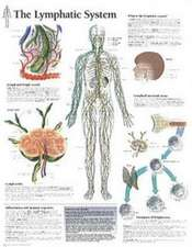 The Lymphatic System Chart:  Wall Chart