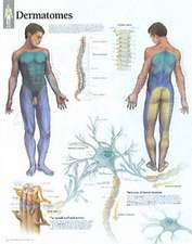 Understanding Dermatomes Chart: Laminated Wall Chart