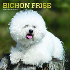 Bichon Frise 2019 Square Wall Calendar