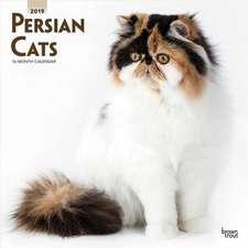 Persian Cats 2019 Square Wall Calendar