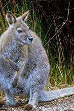 Wallaby Notebook