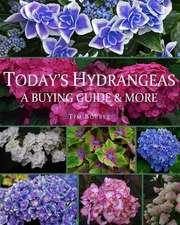 Today's Hydrangeas