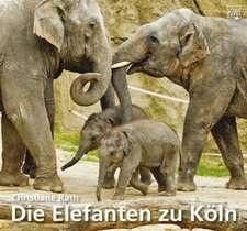 Rath, C: Elefanten zu Köln