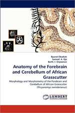 Anatomy of the Forebrain and Cerebellum of African Grasscutter