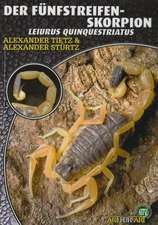 Der Fünfstreifen-Skorpion - Leiurus Quinquestriatus