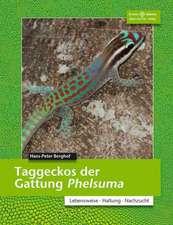 Taggeckos der Gattung Phelsuma